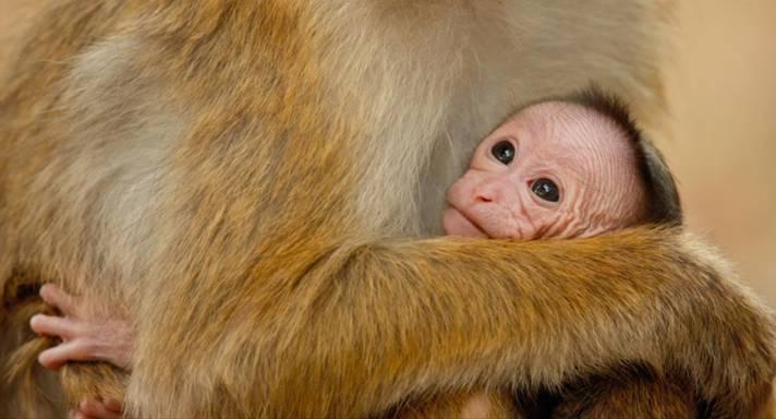 monkey-kingdom